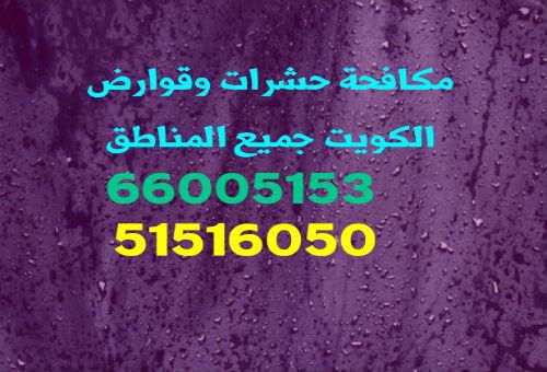 شركة مكافحة القوارض جنوب السرة 55306090 بالكويت