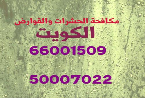 مكافحة حشرات بنيدر 51516050
