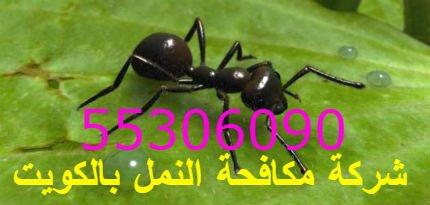 14 خطوة لمكافحة النمل في المنزل