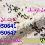 مكافحة النمل الكويت