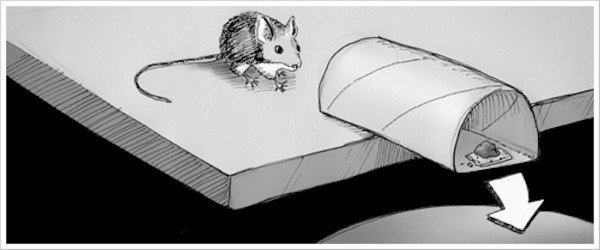 صنع مصيجة فئران فى المنزل