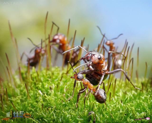مجتمع النمل