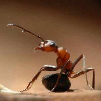 طريقة التخلص من النمل الحفار فى المنزل