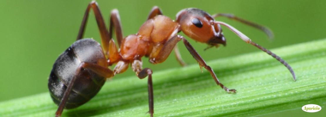 اضرار النمل