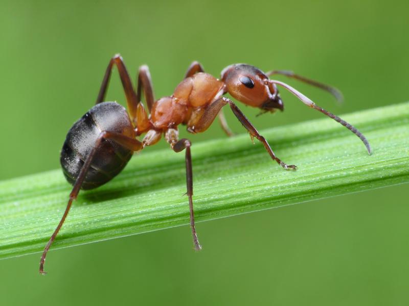 طريقة التخلص من النمل