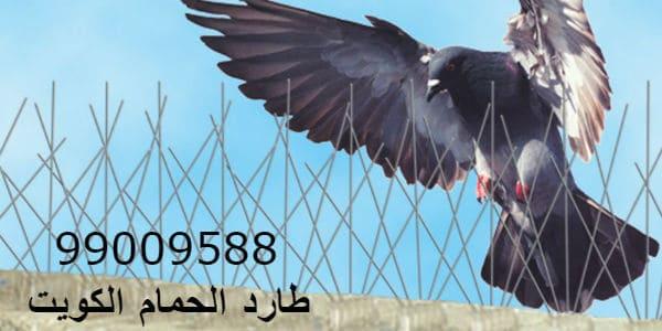 طارد الطيور- طارد الحمام